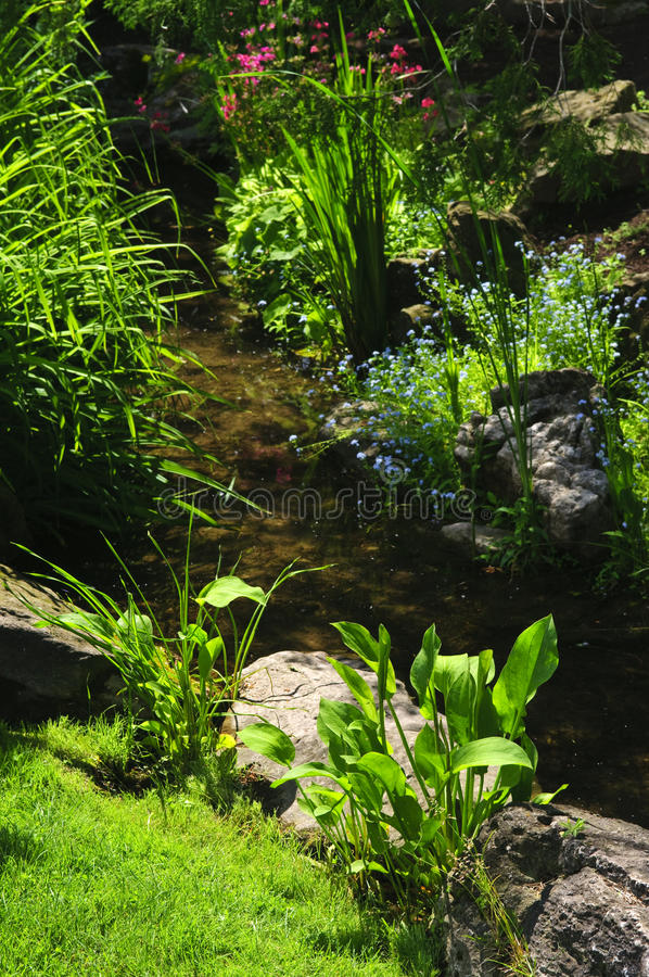 Download Green plants near creek stock image. Image of outdoors - 12253725