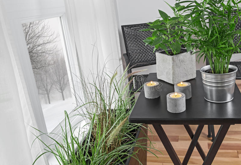 Green plants in a room, and winter landscape behind the window stock photos