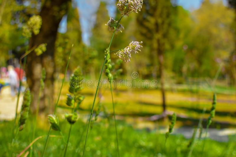 The green plants of spring royalty free stock photo