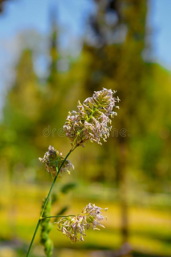 The green plants of spring royalty free stock images