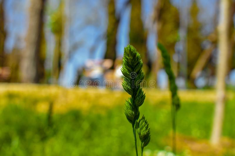 The green plants of spring stock images
