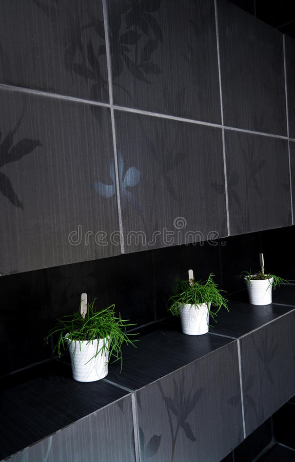 Green Plants In Tiled Bathroom Royalty Free Stock Photography
