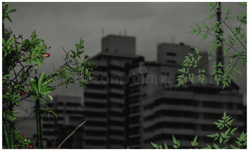 Green plants and urbanization. Background with green plants on foreground and tall buildings on the background on a cloudy day. Dark and dramatic appearance royalty free stock images