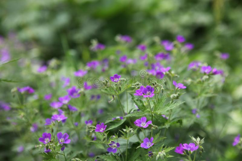Green plants and violet flowers stock photography