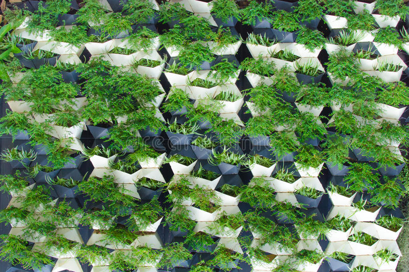 Green plants wall royalty free stock image