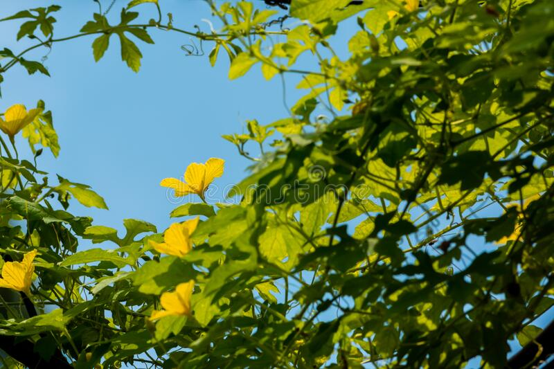 Green plants and yellow flower with blue sky background stock photography