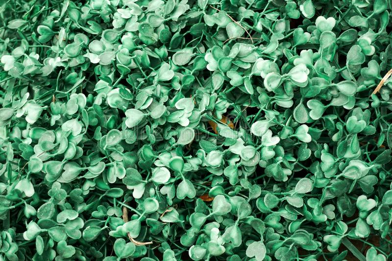 Green plastic grass leaf stock images