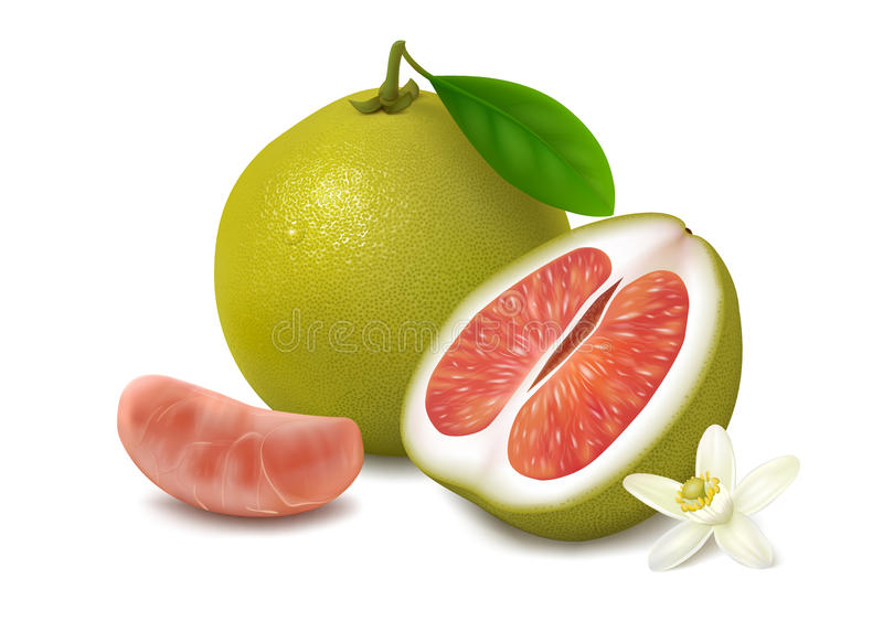 Green pomelo fruit with red pulp on white background. Green shaddock with leaf, half of pomelo with red pulp, slice and flower with shadow, on white background royalty free illustration