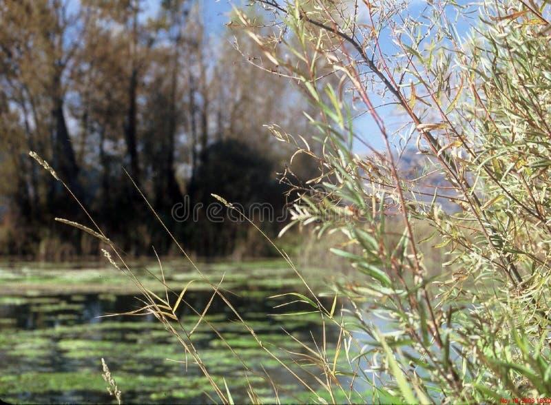 Green pond stock photos