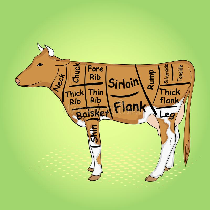 Green pop art background. The cow for the restaurant is divided into parts, pieces of bull beef carcass, scheme. Vector stock illustration
