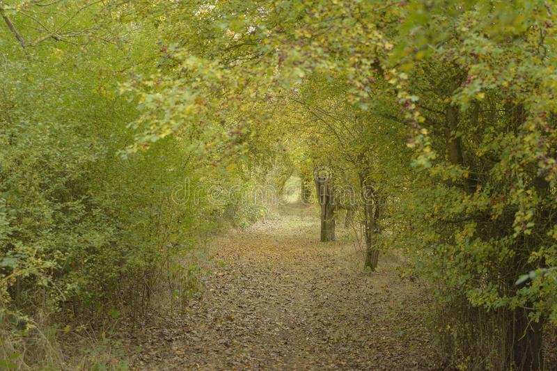 Green Portal. A tunnel of foliage formed by various thorn bushes along a footpath by a lake in Buckinghamshire royalty free stock images