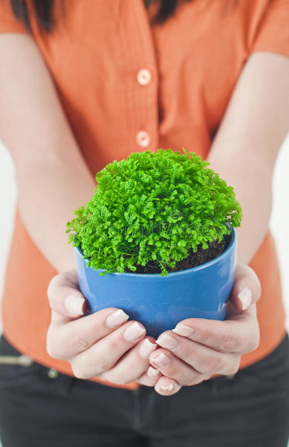 Download A green potted stock image. Image of healthy, blue, natural - 12729553