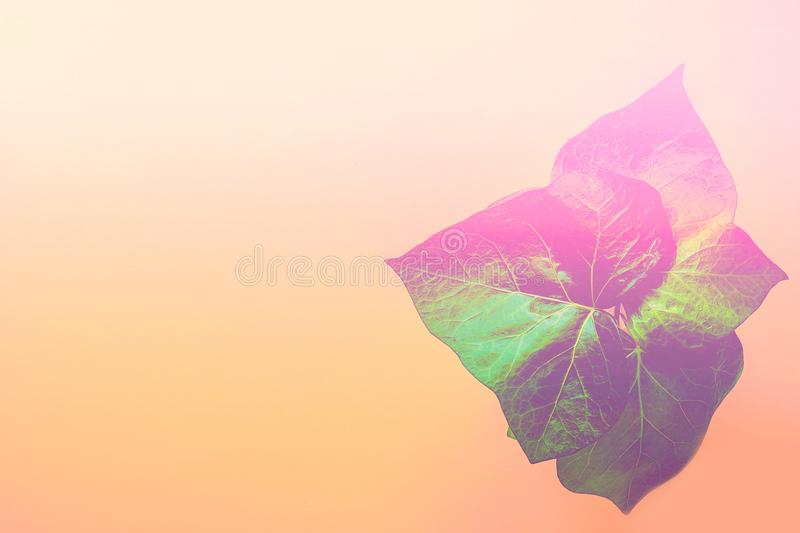 Green potted house room plant on duotone gradient peachy pink yellow background. Purple leaks. Neon colors. Trendy abstract royalty free stock photo