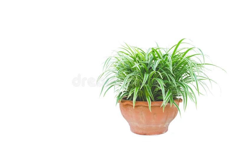 green potted plant, trees in the pot isolated on white royalty free stock photos