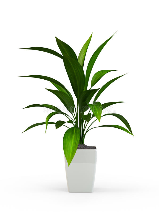 Green potted plant stock illustration