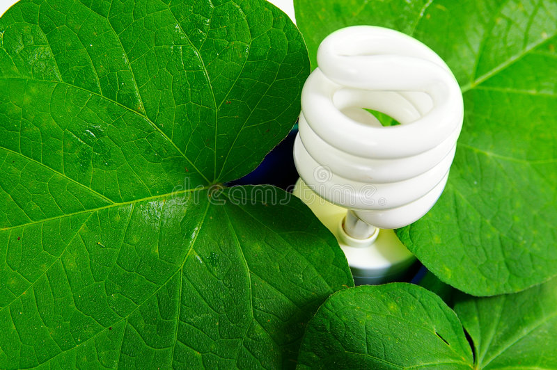 Green power. Compact fluorescent light bulb and green leaves (green power royalty free stock photo