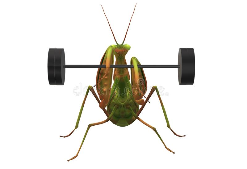 A green praying mantis lifting a barbell weight with its forelegs stock photos