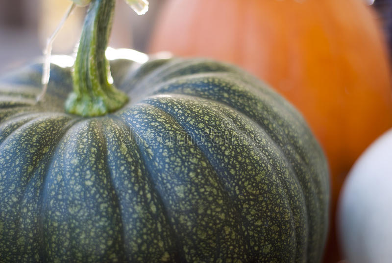 Green Pumpkin. A close-up shot of a green pumpkin stock photography
