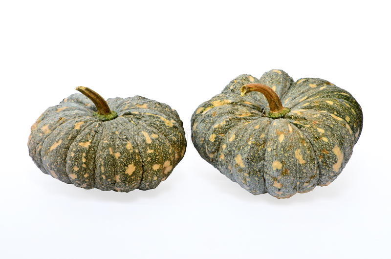 Green pumpkin fruit. On white background stock photography