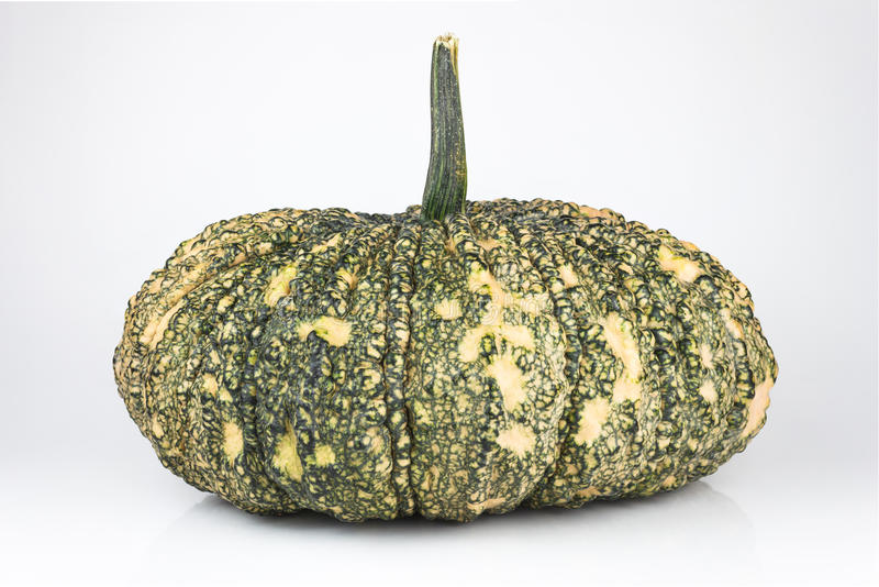 Green pumpkin. On isolated white stock photos