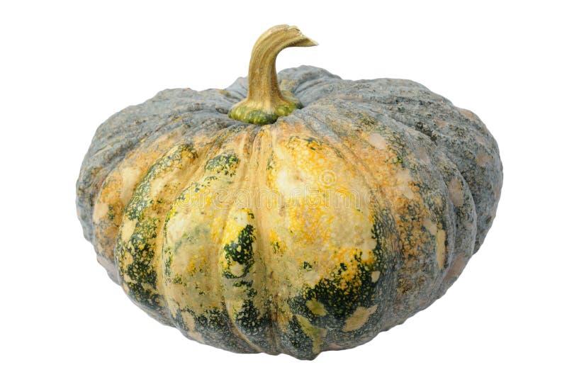 Green pumpkin. On white background royalty free stock photos