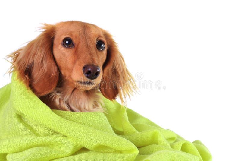 Green puppy stock photos