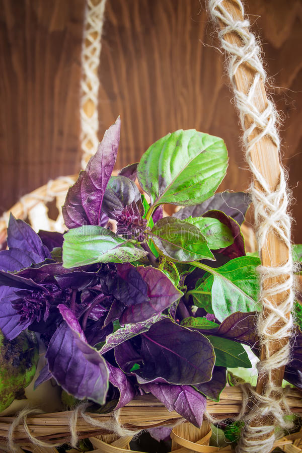 Green and purple basil in a basket royalty free stock image