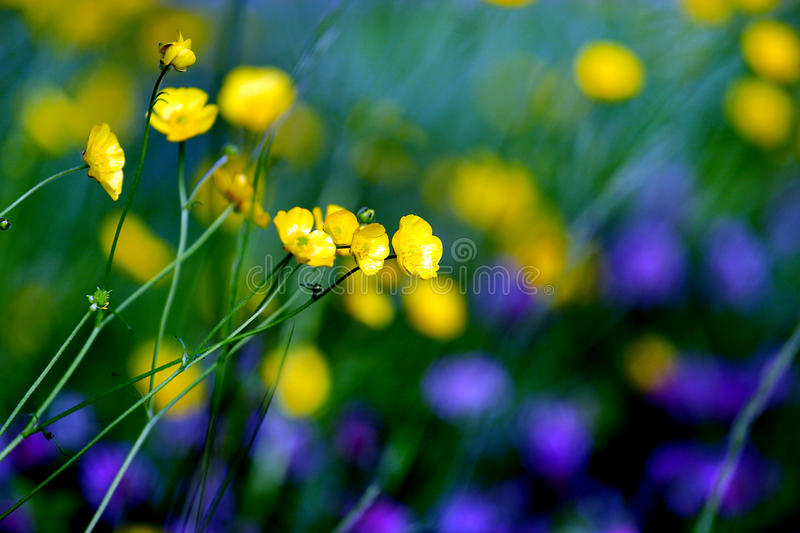 Green and purple beautiful flower stock photography