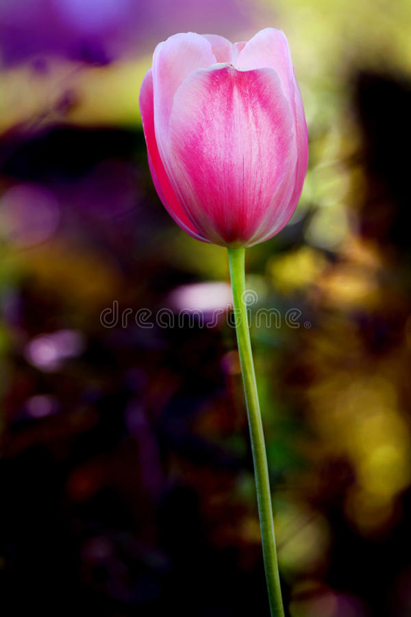 Green and purple beautiful flower stock images