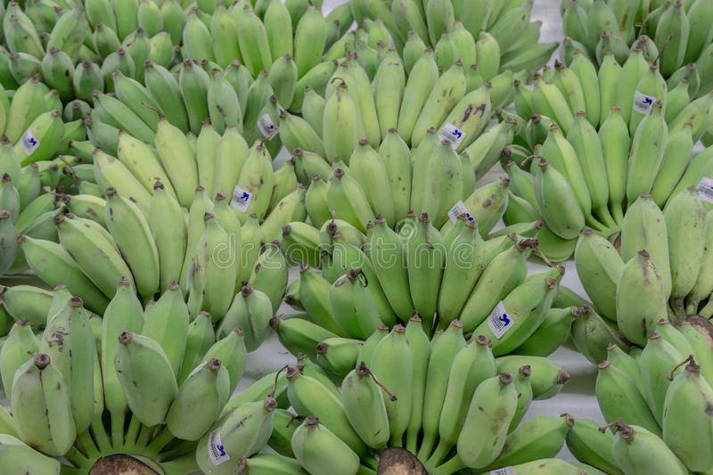 Green Raw Banana with price tag Thai Bath arranged display in Market Fresh Food Concept. Thailand South East Asia royalty free stock photography