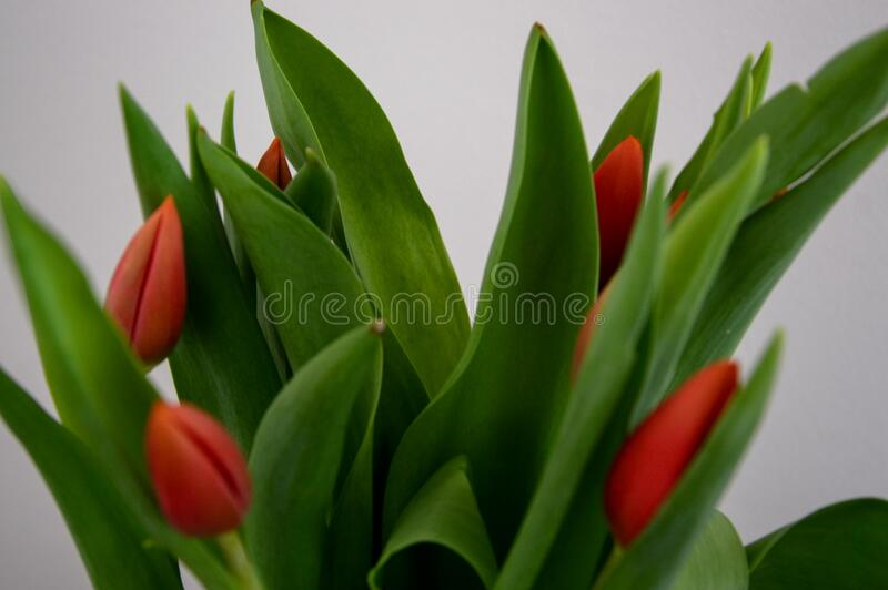 Green and Red Indoor Plant Beside White Textile stock photography