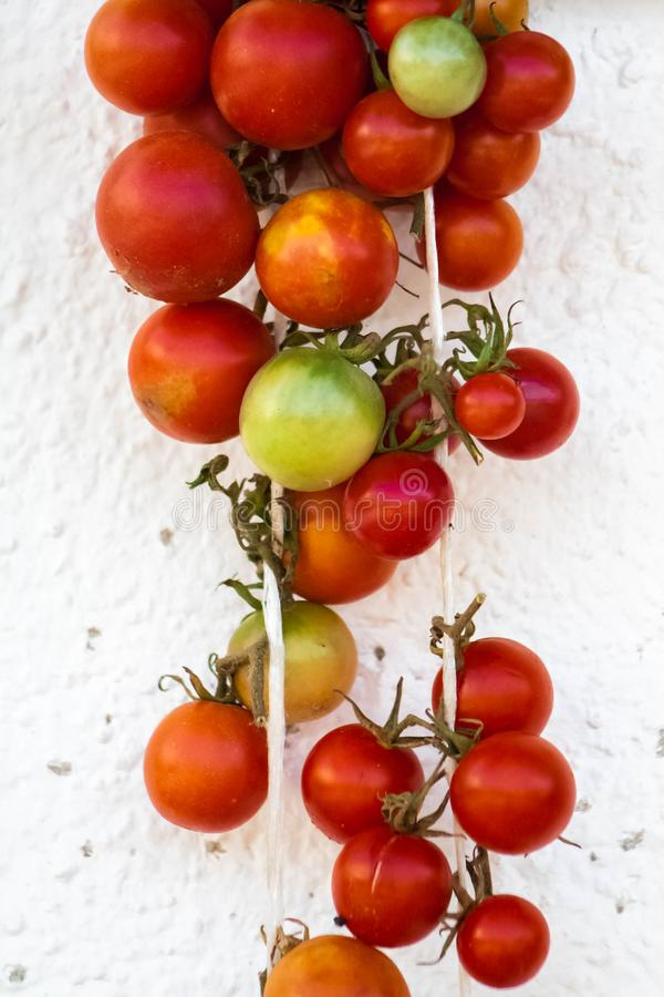Green and red tomatoes hanging on the wall royalty free stock photography