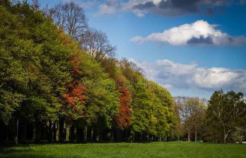 Green and Red Tress Under Blue Sky and White Clouds during Daytime stock photography