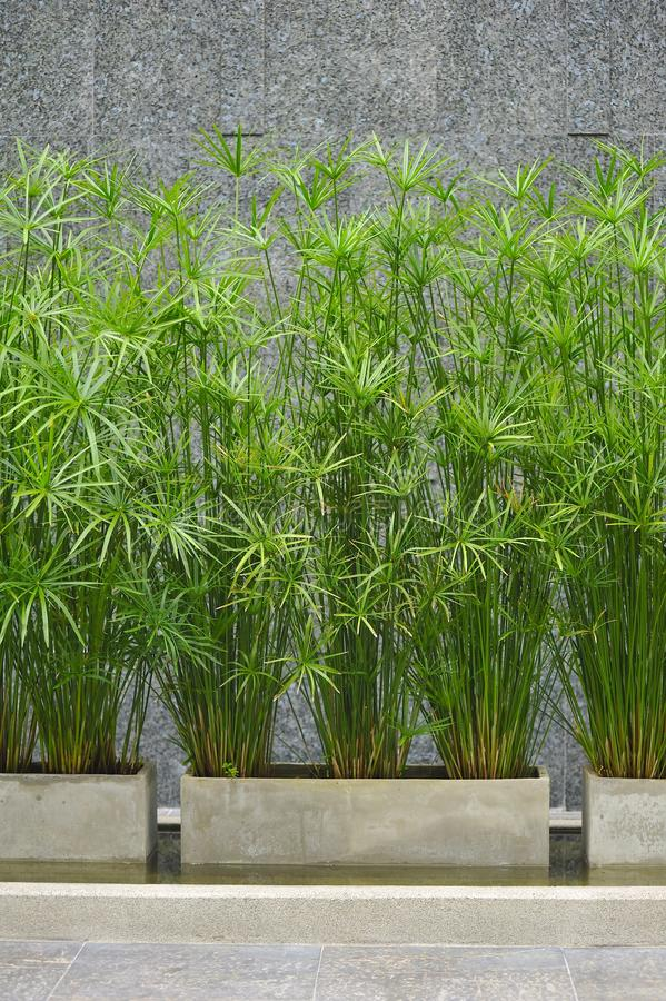 Free Green Reed Exterior In Modern Building Royalty Free Stock Images - 17351699