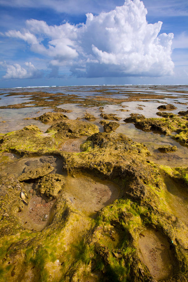 Green reef at low tide stock image