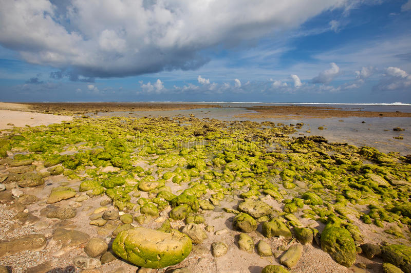 Green reef at low tide royalty free stock photography