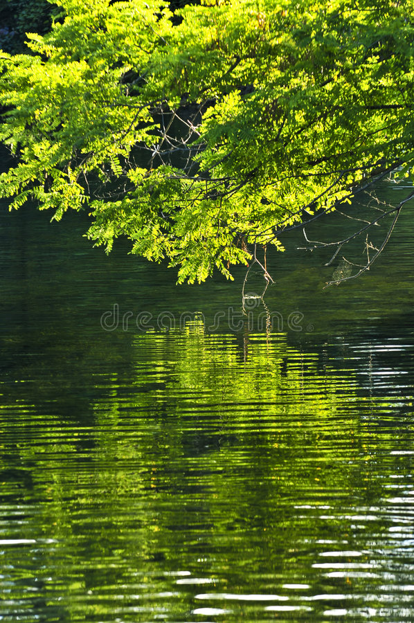 Free Green Reflections In Water Royalty Free Stock Image - 6806736
