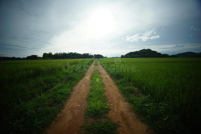 Green rice field in northern Thailand stock photos