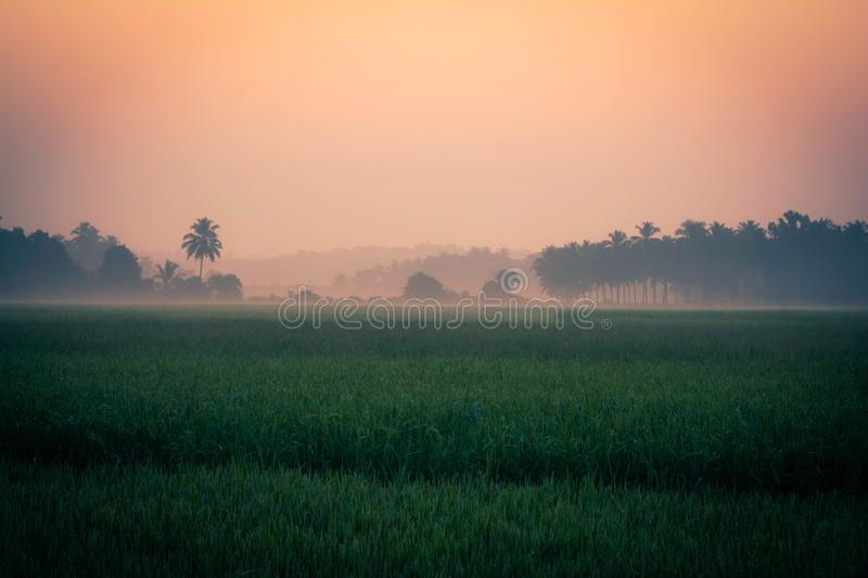 Green rice field and sky at morning royalty free stock photography