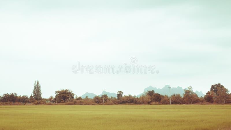Green rice field in summer sunshine beautiful joyful moment with summer mountain landscape.Rural landscape with mountains, hills,. Fields. Countryside nature stock image
