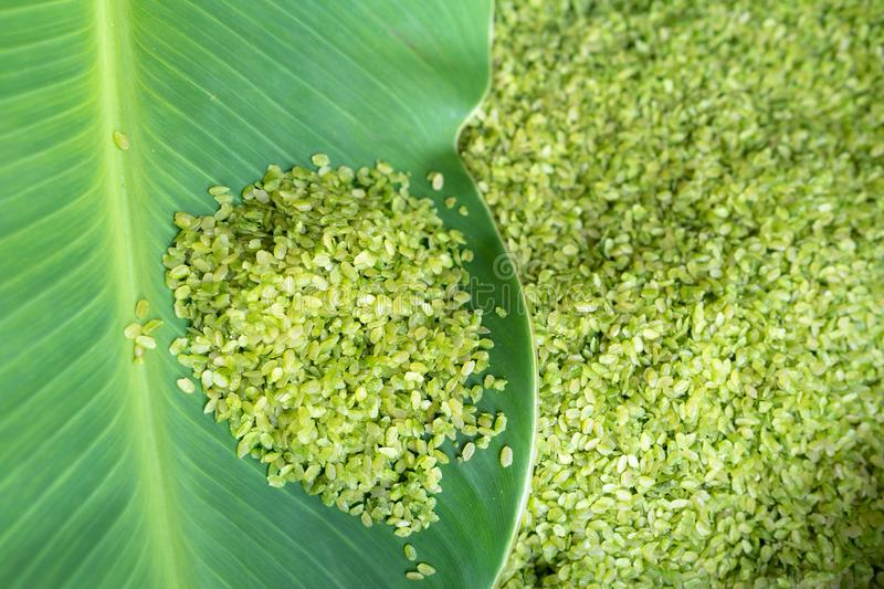 Green rice flakes ( Com in Vietnamese). Com is freshly harvested sticky (glutinous/sweet) rice that's been toasted to bring out i. Ts delicate flavor royalty free stock photos