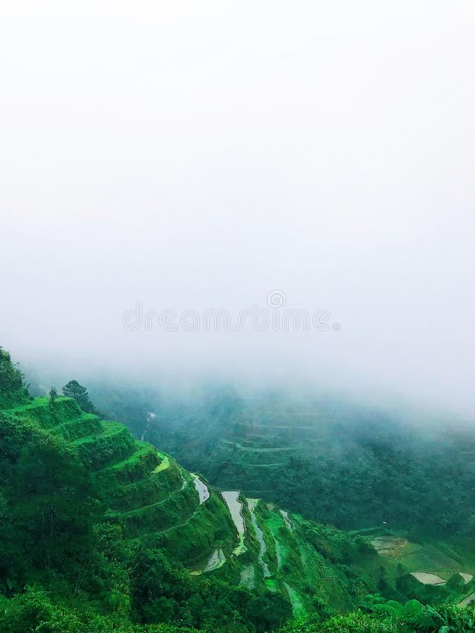 Green Rice Terraces With Foggy Weather stock photography