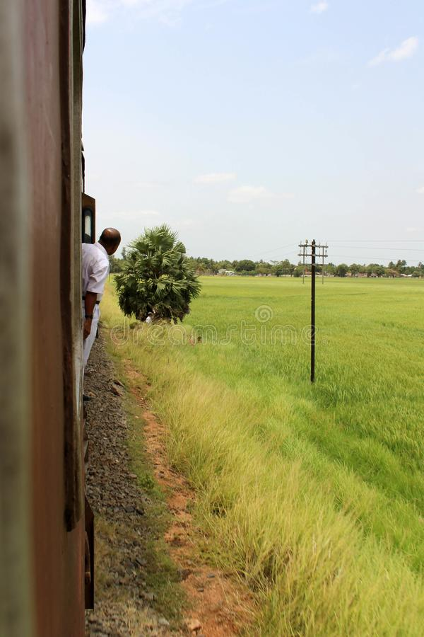 The green ricefield as seen from the train going to Trincomalee stock image