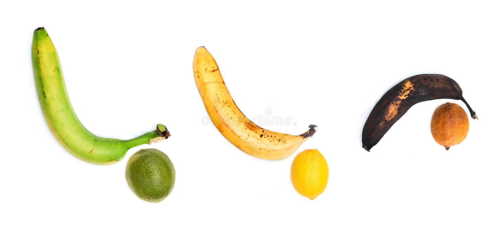 The green, ripe and rotten banana together. With the lime, fresh lemon and dry lemon as a symbol for man´s maturing and changing of potency and sexual royalty free stock images