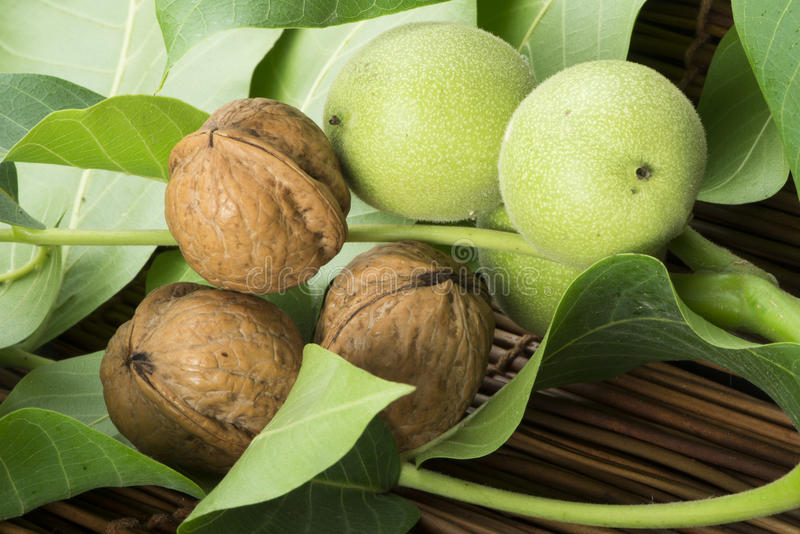 Download Green And Ripe Walnuts. Studio Shot Stock Photography - Image: 31369272