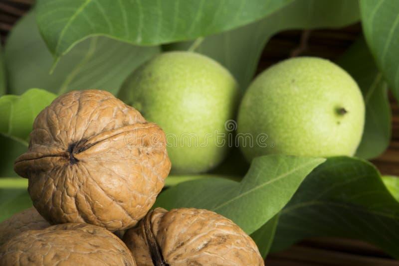 Download Green And Ripe Walnuts. Studio Shot Stock Photo - Image: 31369282
