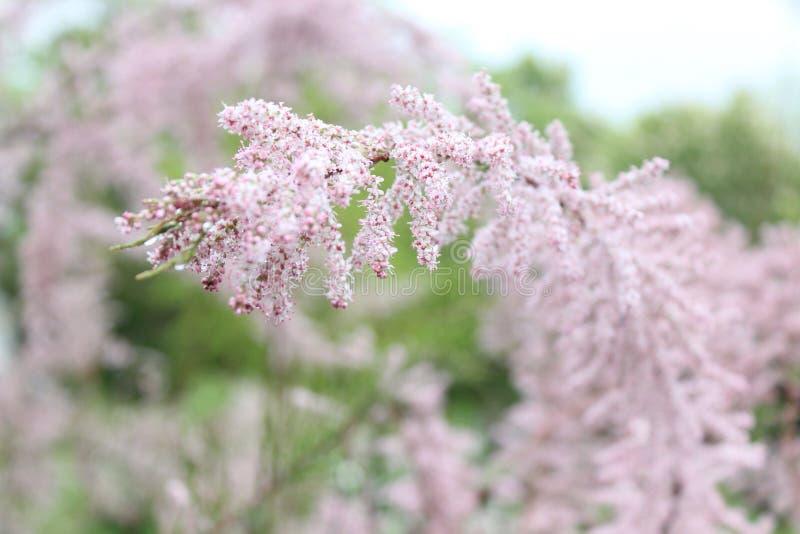 Green River för blommor för naturvårsommar parkerar gullig trevlig gräsplan trädet royaltyfri bild