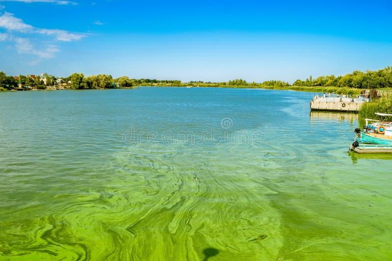 Green River Wasser mit Algenblüte lizenzfreies stockbild