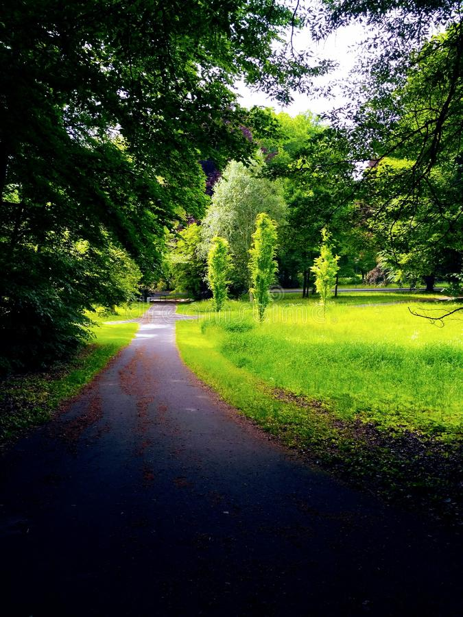 The green road. royalty free stock image