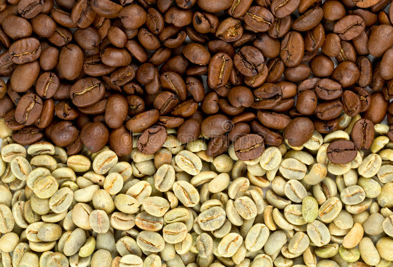 Green jamaican blue mountain coffee beans